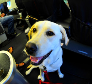 You can be sure that dogs imported into the United States for resale will not be flying first class.