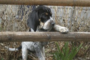 Perhaps hard to believe, but in some settings, too few puppies is actually a good thing...