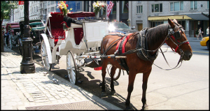 CarriageHorse