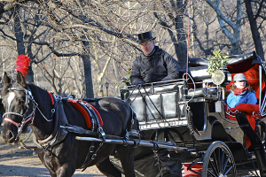 Carriage Horse Central Park