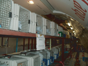 Humane rescue operation importing large numbers of dogs from the Middle East, 2006. Photo courtesy of Sheryl Shapiro, CDC New York Quarantine Station.