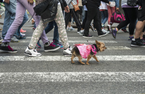 There can be a lot of distractions and challenges for a little dog in a big city!