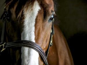HorseProfileSmall