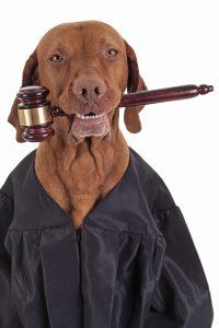 judgedog