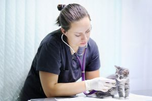 Veterinarian Checking Kitten