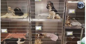 NAIA Offical Blog | Animal Welfare | Animal Rights Organization