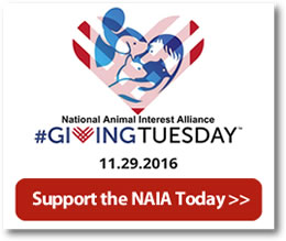 Giving Tuesday - Help The NAIA
